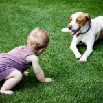 Introduce Your New Baby to Your Dog