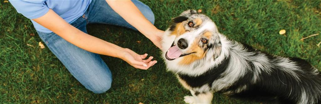 Pet Insurance Cost Information and Discounts from Pets Best